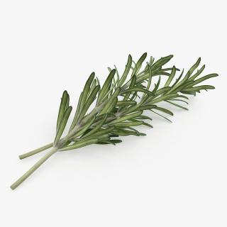 Fresh Rosemary 3D model