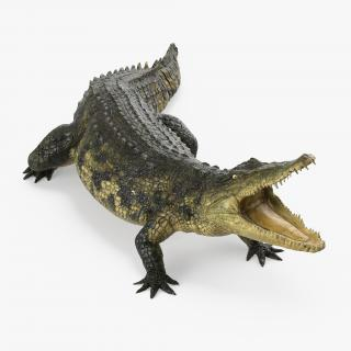 Crocodile Attacks 3D