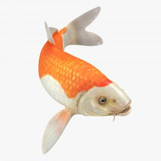 3D model Harivake Koi Fish Swiming Pose