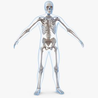 3D Male Body with Skeleton model