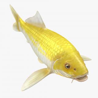3D model Yellow Koi Ogon Fish