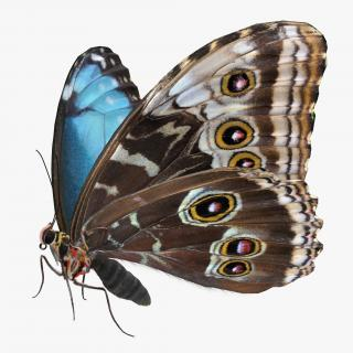 3D Morpho Peleides Butterfly Rigged with Fur