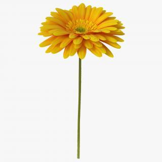3D Yellow Gerbera Flower