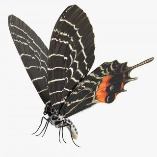 3D Bhutanitis Lidderdalii Butterfly Rigged with Fur model