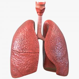 Lung Anatomy 3D