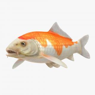 Harivake Koi Fish 3D