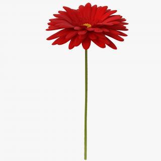 3D Red Gerbera Flower model