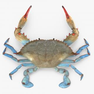3D Crabs Collection 2 model