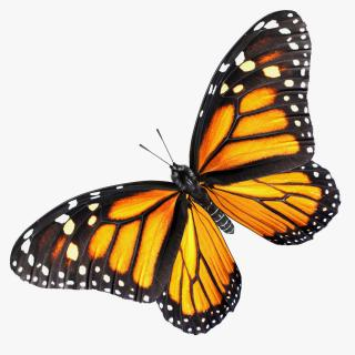 3D Monarch Butterfly with Fur Rigged model