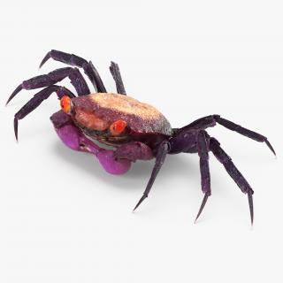 3D model Purple Vampire Crab Geosesarma