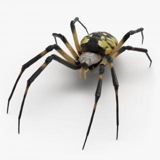 3D model Argiope Aurantia or Yellow Garden Spider