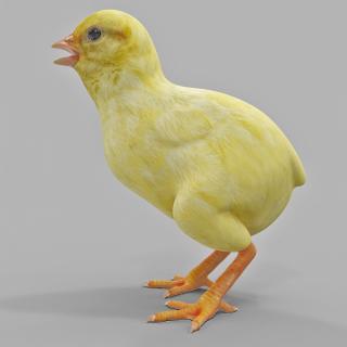 Chick 3D model