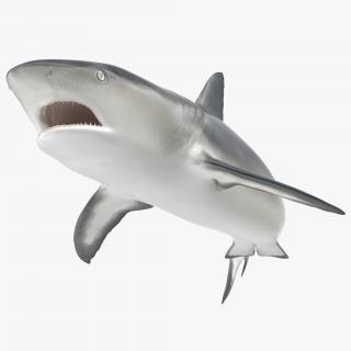 Caribbean Reef Shark Swimming Pose 3D model