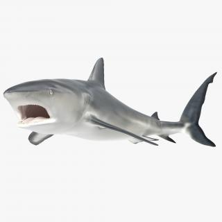 Caribbean Reef Shark Rigged 3D