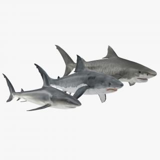 Sharks Collection 3D