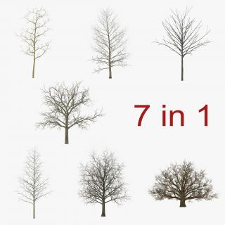 3D Winter Trees Collection model