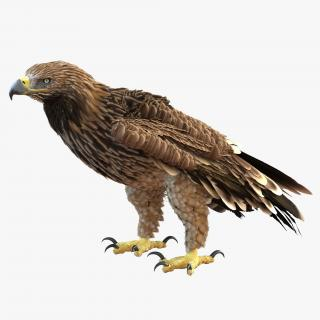 3D Imperial Eagle Pose 5