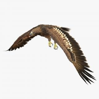 3D Imperial Eagle Pose 4