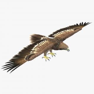 Imperial Eagle 3D model