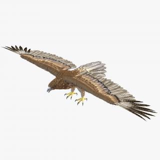 Gurney Eagle 3D