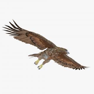 Gurney Eagle Pose 7 3D model