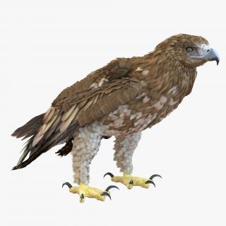 Gurney Eagle Pose 5 3D model