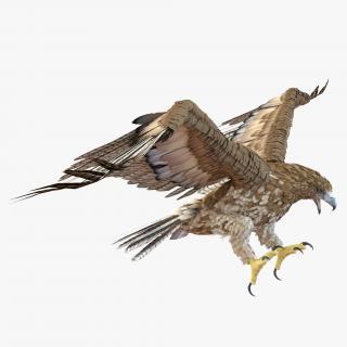 Gurney Eagle Pose 2 3D model