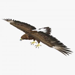 Golden Eagle 3D