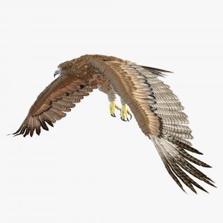 Gurney Eagle Pose 4 3D model
