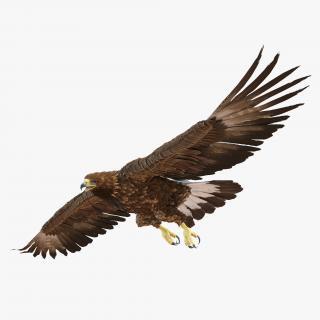 Golden Eagle Pose 7 3D model