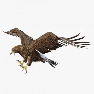 Golden Eagle Pose 6 3D model