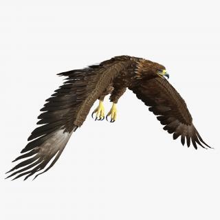 Golden Eagle Pose 4 3D model