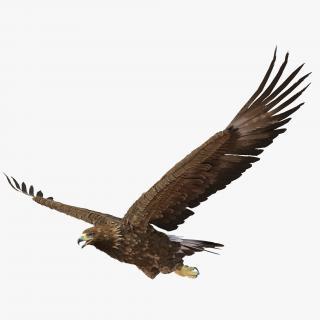 Golden Eagle Pose 2 3D model