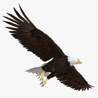 Bald Eagle Pose 7 3D