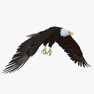 Bald Eagle Pose 6 3D