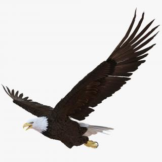 Bald Eagle Pose 4 3D