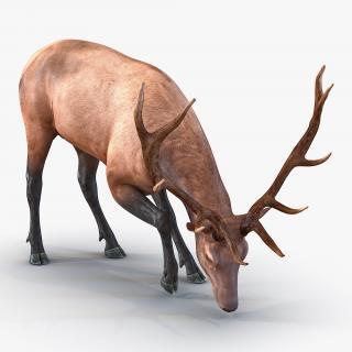 3D model Elk Pose 3