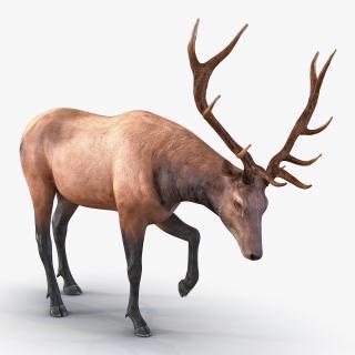 3D model Elk Pose 4