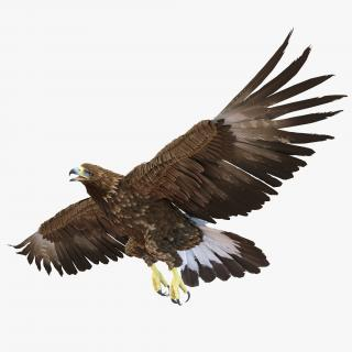 Golden Eagle Rigged 3D model