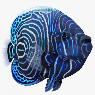 3D Juvenile Emperor Angelfish