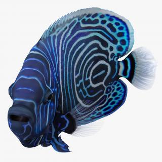 3D Juvenile Emperor Angelfish Rigged model