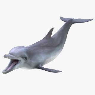Dolphin Pose 3 3D model
