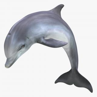Dolphin Pose 2 3D model