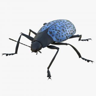 3D model Gibbifer Californicus Beetle Rigged