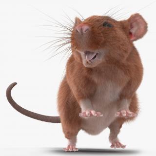 Rat 2 Rigged 3D