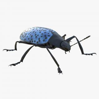 3D Gibbifer Californicus Beetle model