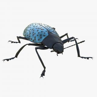 3D model Gibbifer Californicus Beetle 2