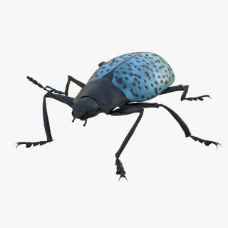 Gibbifer Californicus Beetle 2 Rigged 3D