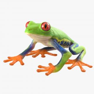 3D model Red Eyed Tree Frog Pose 4