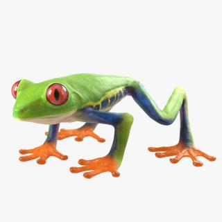 3D model Red Eyed Tree Frog Rigged